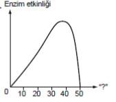 biyoloji-1-test-2-soru-12