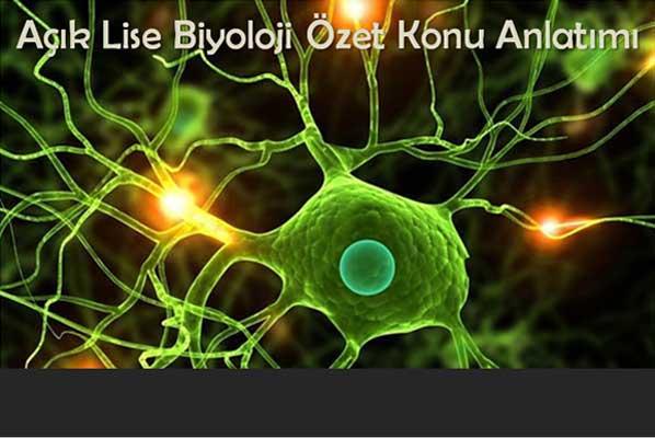 Denetleyici ve Düzenleyici Sistem, Duyu Organları